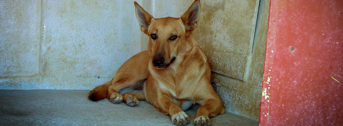 hundeherzen hunde aus spanien